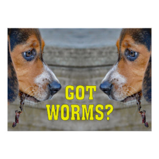 Funny Beagle Puppy Got Worms? Poster