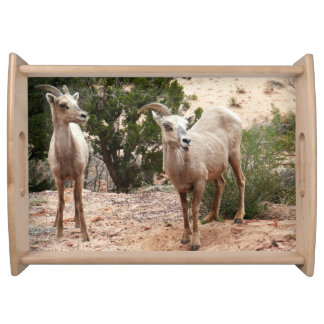Funny Bighorn Sheep at Zion National Park Serving Tray