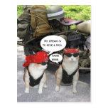 Funny Biker Cats