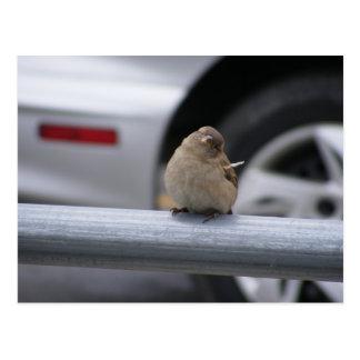 Funny Bird, Sparrow Postcard