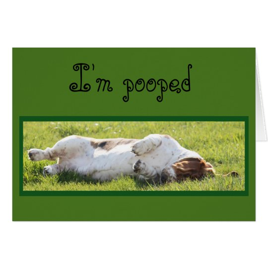 Funny Birthday Card with Sleeping Basset Hound