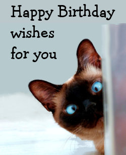 Funny Birthday Wishes Siamese Cat Animal Humor Card