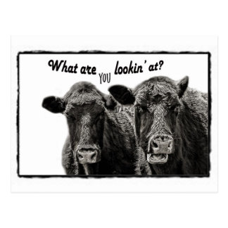 Funny Black and White Funny Cows Post Card