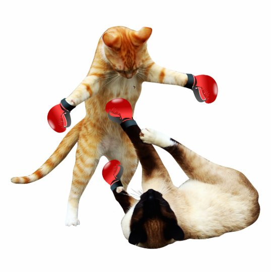 Funny boxing cats photo sculpture magnet