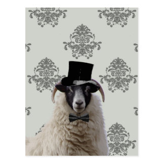 Funny bridegroom sheep in top hat postcard