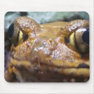 Funny Brown Frog mouse pad