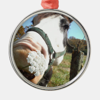 Funny Brown &White horse w/ wildflower in teeth  B Silver-Colored Round Decoration
