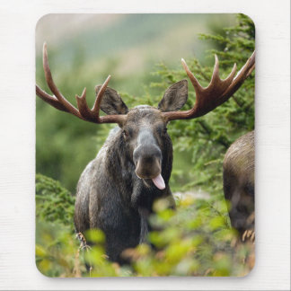 Funny Bull Moose Mouse Pad