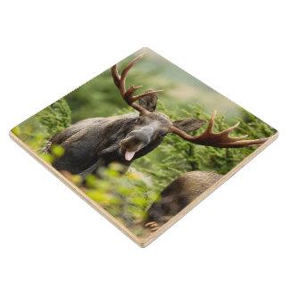 Funny Bull Moose Wood Coaster