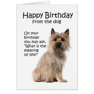 Funny Cairn Terrier Birthday Card