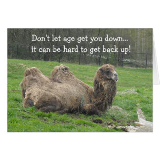 Funny Camel Birthday Greeting Card