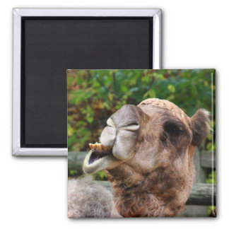 Funny Camel Wildlife Animal Photo Square Magnet