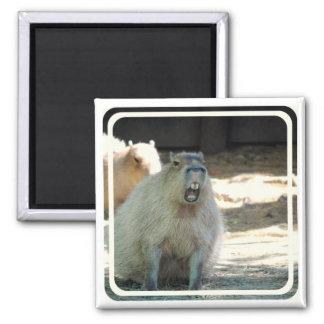 Funny Capybara  Magnet