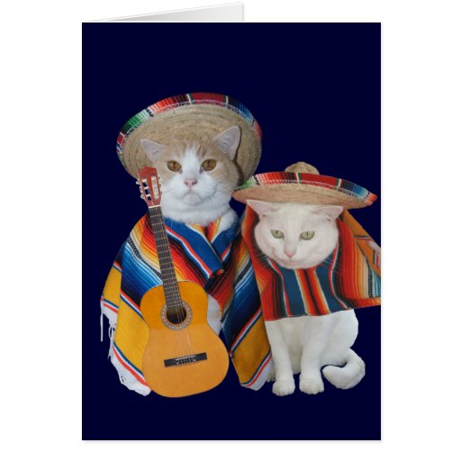 Funny Cat Anniversary for Husband in Spanish Cards
