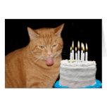 Funny cat birthday