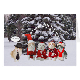Funny Cat Carolers Greeting Cards