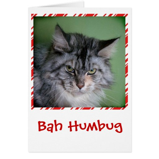 Funny Cat Christmas greeting card