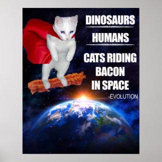 Funny Cat: Evolution Poster