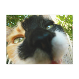 Funny cat face close up photo canvas print