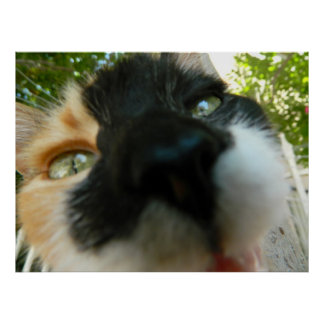Funny cat face close up photo poster