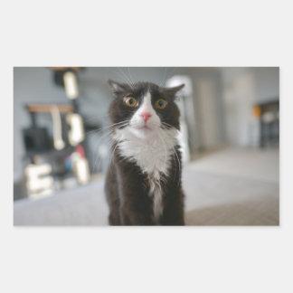 Funny Cat Face Rectangular Sticker