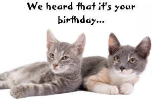 Funny Cat Give Us Tuna Birthday Card