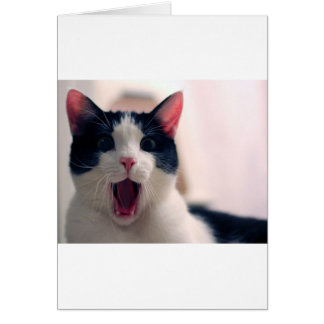 Funny Cat Greeting Card