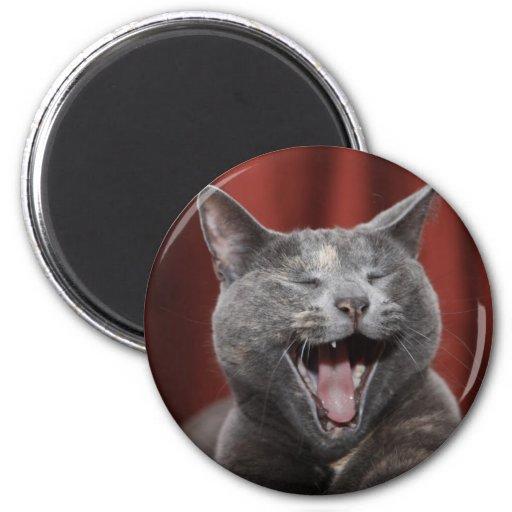 Funny cat fridge magnet