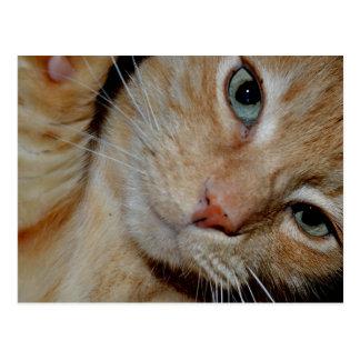 Funny Cat Postcard