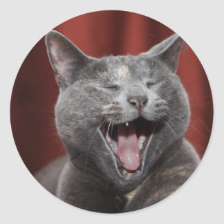 Funny cat round sticker