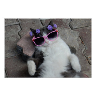Funny cat with pink glasses poster