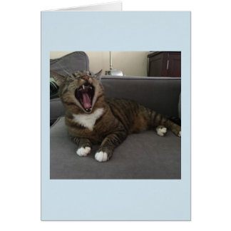 Funny cats, Apology for isolating myself card
