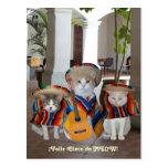 Funny Cats Feliz Cinco de Mayo