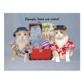 Funny Cats on Cruise Postcard