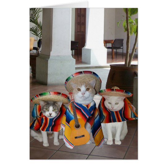 Funny Cats Spanish Birthday for anyone Card