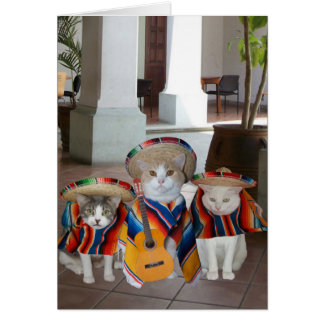 Funny Cats Spanish Birthday for anyone Greeting Card