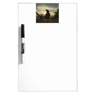 Funny Chicken in backlight Dry Erase Board