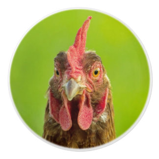 Funny Chicken Portrait on a Green Background Ceramic Knob