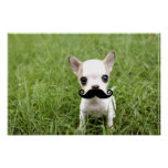Funny Chihuahua Mustache Poster
