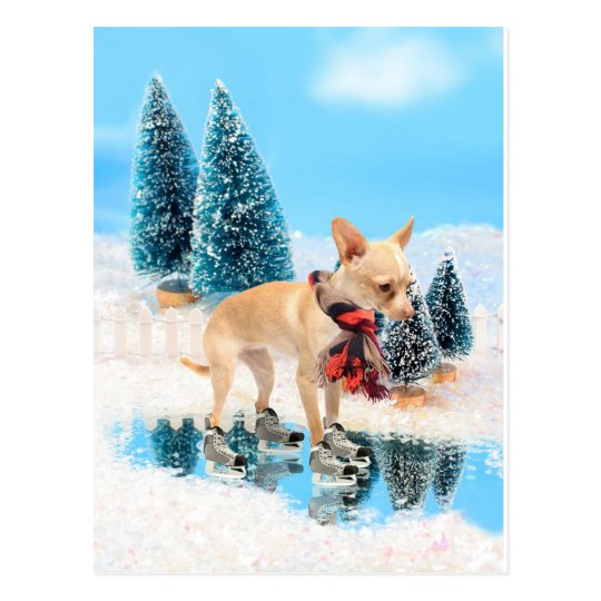 Funny chihuahua with scarf and skates postcard