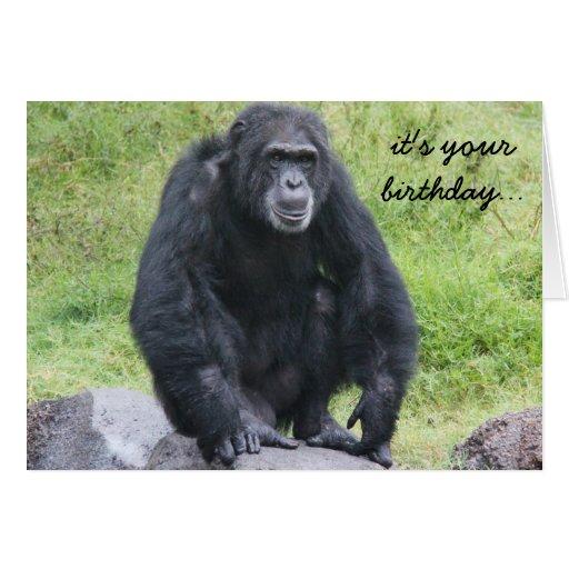 Funny Chimpanzee Birthday, wanna monkey around?! Greeting Cards