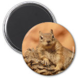 Funny chipmunk lying on a rock 6 cm round magnet
