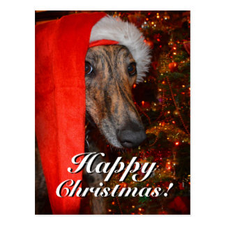Funny Christmas Santa Greyhound Lurcher Postcard