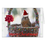 Funny Christmas Squirrel Note Card