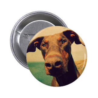 Funny Closeup of a Natural Doberman Dog 2 Inch Round Button