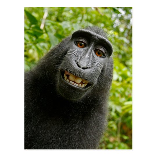 Funny Crested Monkey Smiling Selfie Postcard
