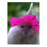 Funny Cute Hamster Postcard