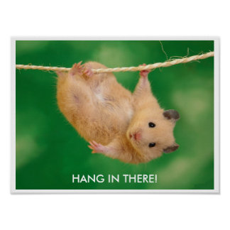 Funny & Cute Hamster Poster