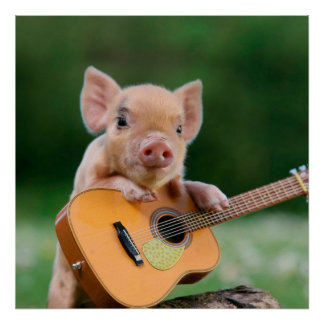Funny Cute Pig Playing Guitar Poster