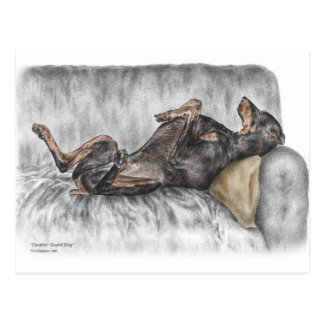 Funny Doberman on Sofa Postcard